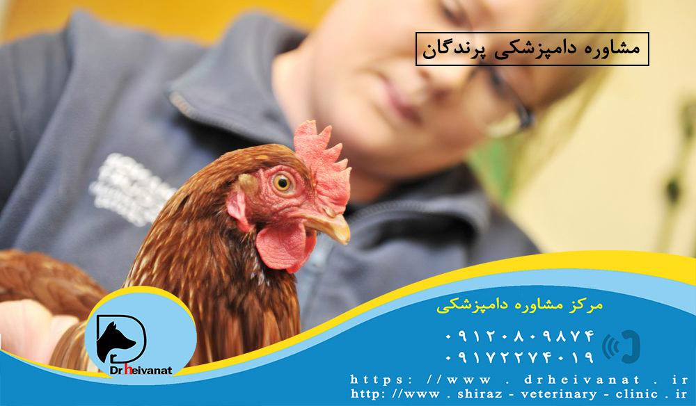 Photo of دامپزشکی پرندگان شیراز