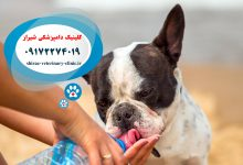 Photo of درمان سگ مسموم : ۸ راه درمان سگ مسموم در خانه