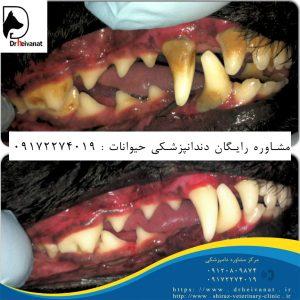 دندانپزشکی حیوانات شیراز