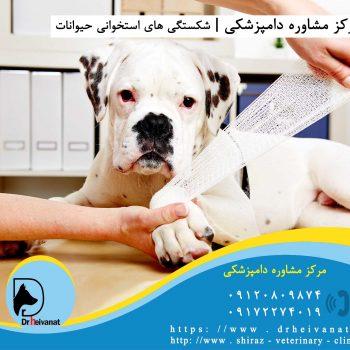شکستگی دست سگ شیراز یزد تهران