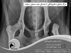 شکستگی لگن سگ شیراز یزد تهران