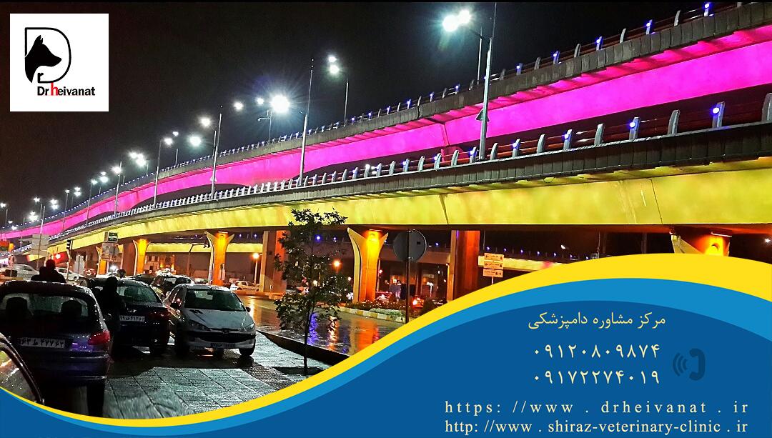 Photo of دامپزشکی معالی آباد شیراز | دامپزشکی مالی آباد شیراز