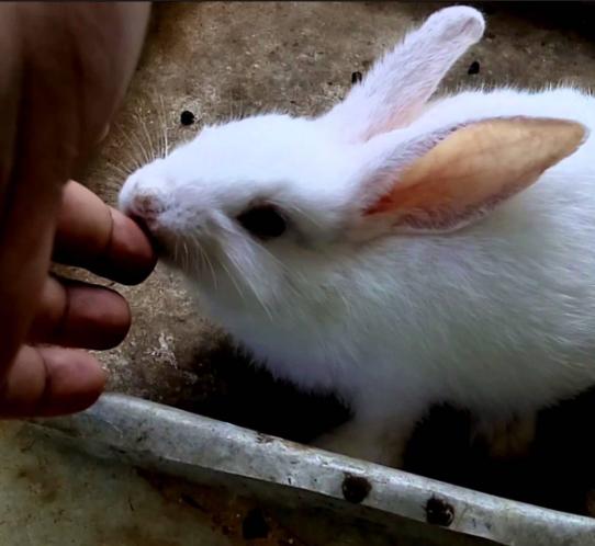 Photo of علت گاز گرفتن خرگوش – چرا خرگوش ها گاز می گیرند – گاز گرفتگی خرگوش