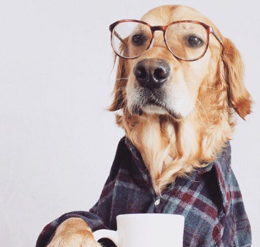 Photo of تشخیص سن سگ