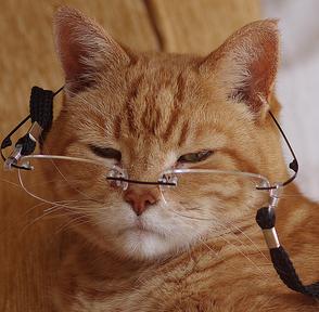 Photo of تشخیص سن گربه