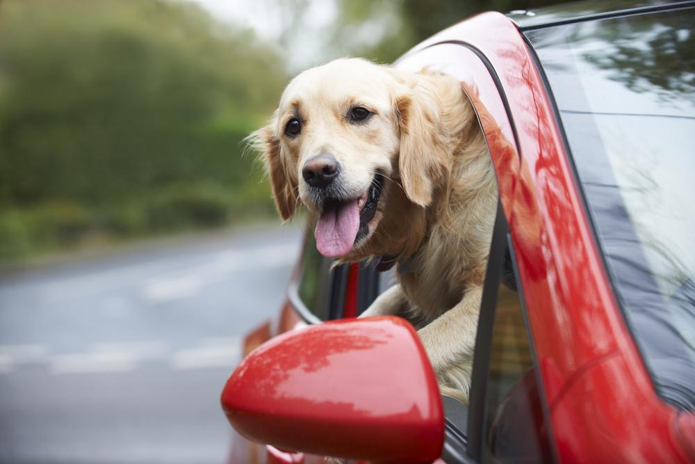 Photo of استفراغ سگ در ماشین