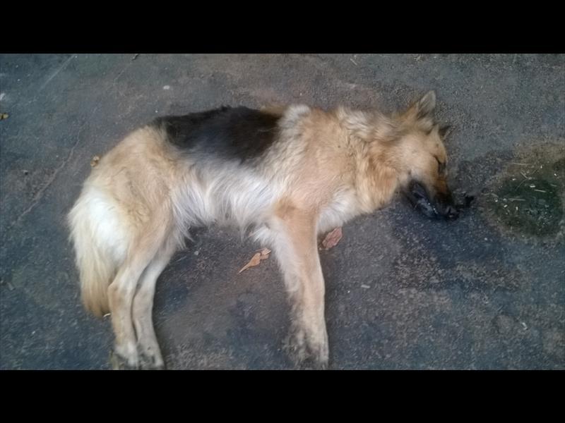 Photo of علایم مسمومیت در سگ ها | مسمومیت سگ با سم