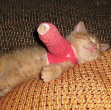 Photo of درمان شکستگی دست گربه در یزد | درمان شکستگی پای گربه | درمان دررفتگی دست و پای گربه | درمان ضرب دیدگی دست و پای گربه | درمان شکستگی دم گربه | درمان شکستگی لگن گربه