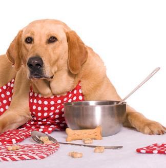 Photo of غذای سگ