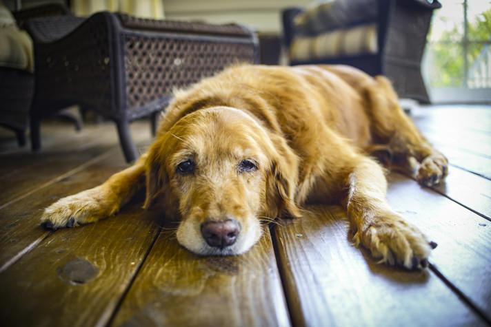 Photo of علت استفراغ کف سفید در سگ | دلیل استفراغ زرد رنگ در سگ ها | استفراغ کف مانند در سگ | علت استفراغ کف سگ