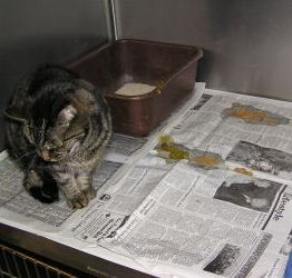 Photo of اسهال در گربه ها – درمان اسهال گربه در خانه – ماست برای گربه – اسهال و استفراغ در گربه – قرص ضد اسهال گربه